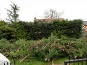 Domestic Hedge Cutting